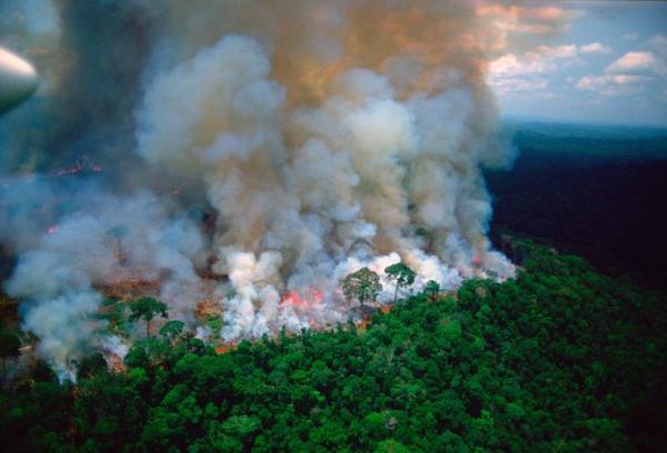 Presidente da França e secretário-geral da ONU relatam preocupação com Amazônia