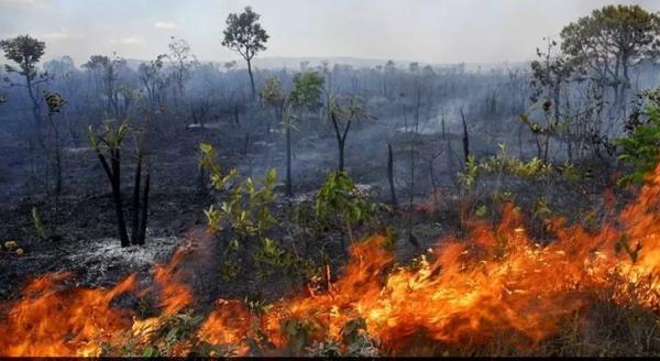 Meio ambiente e Amazônia receberão R$ 1 bilhão recuperado pela Lava Jato