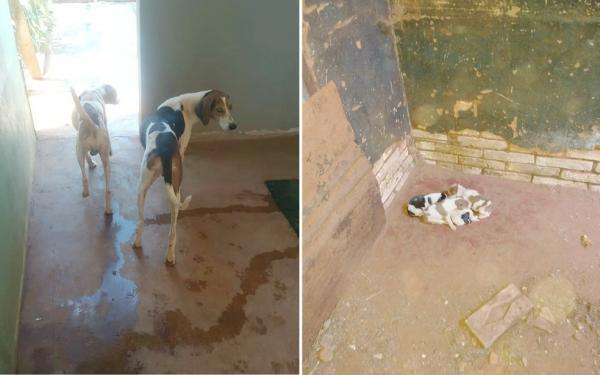 Pedreiro é multado em R$ 21,5 mil por deixar 7 cães sem comida em meio a fezes e urina