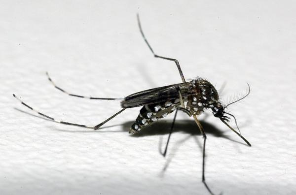 PERIGO - Quase mil Cidades têm risco de surto de dengue